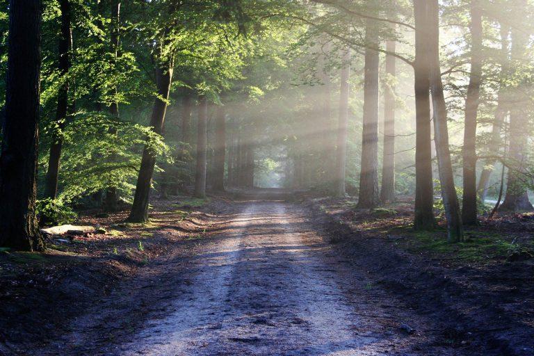 Widok na leśną ścieżkę