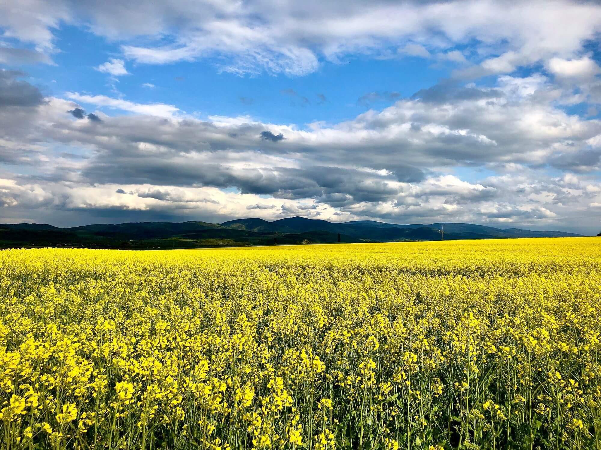 Wiosenny widok na Masyw Śnieżnika, okolice agroturystyki Leśny Spokój.
